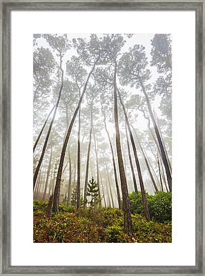Guardians Of The Young Framed Print