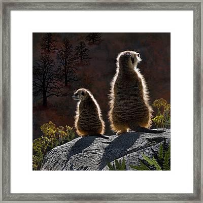 Guarding Meerkats Framed Print