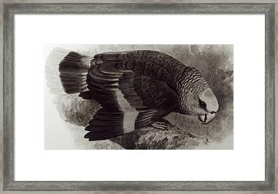 Guilding's Amazon Parrot,  Framed Print