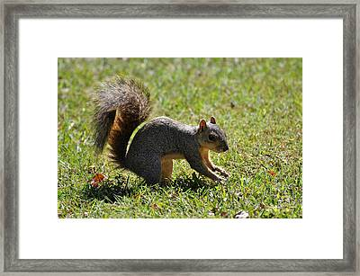 Guilty Look Framed Print by Teresa Blanton