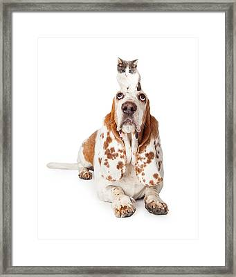 Guilty Looking Basset Hound Dog Laying   Framed Print by Susan Schmitz