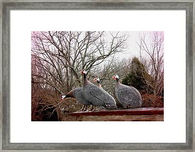Framed Print featuring the photograph Guinea Foul by Bonnie Willis