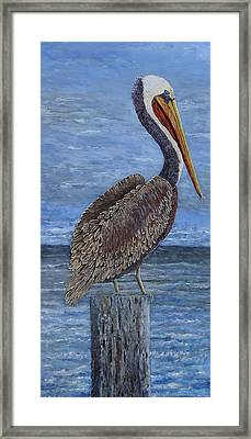 Gulf Coast Brown Pelican Framed Print by Suzanne Theis