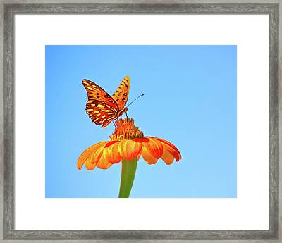 Gulf Fritillary Landing Framed Print by Mark Andrew Thomas