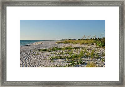 Gulf Of Mexico Beach Framed Print by Steven Scott