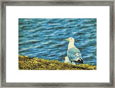 A Baikal Gull Framed Print