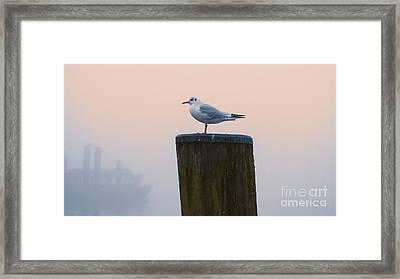 Gull And Fog Framed Print