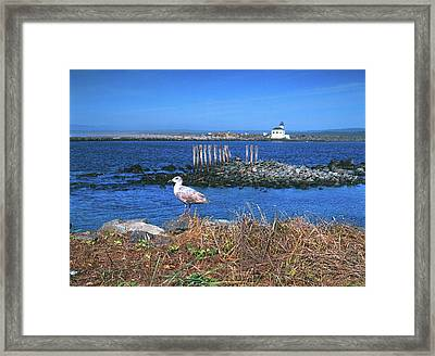Gull And Lighthouse Framed Print by Jim Nelson
