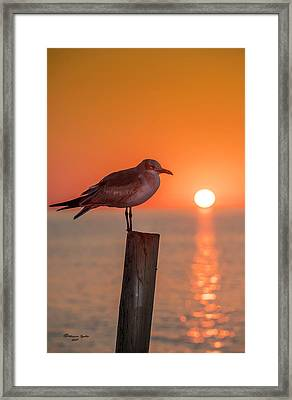 Gull And Sunset Framed Print