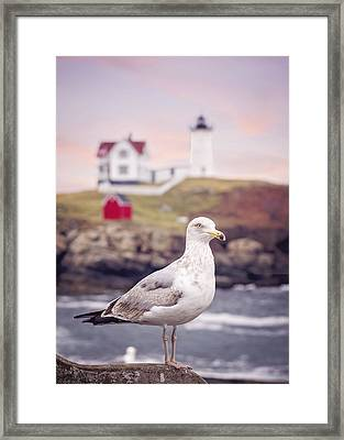 Gull At Nubble Framed Print by Heather Applegate