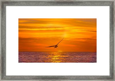 Gull At Sunrise Framed Print by Allan Levin