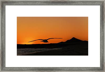 Gull At Sunset Framed Print
