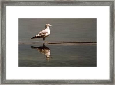 Gull Framed Print by Bob Whitt