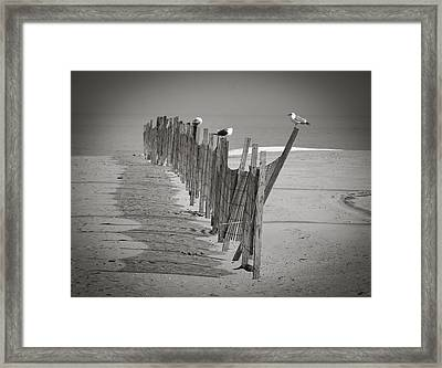 Gull Fence Framed Print by Andy Smetzer