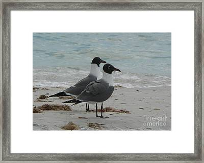 Gull Friends Framed Print
