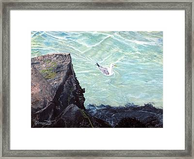 Gull In Shallows Of Barnegat Inlet Framed Print