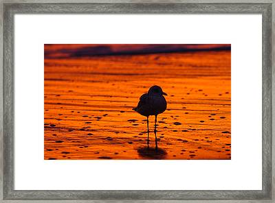Gull Caught At Sunrise Framed Print