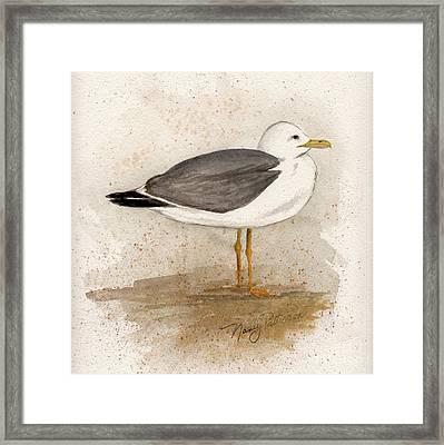 Gull Framed Print by Nancy Patterson