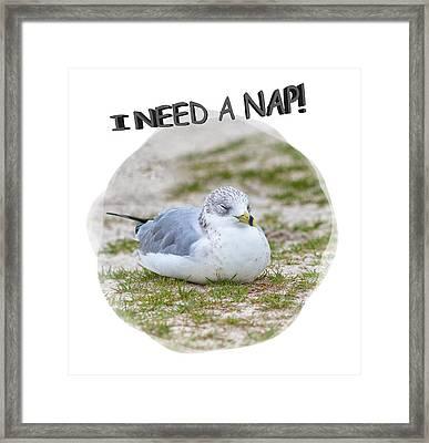 Gull Nap Time Framed Print by John M Bailey