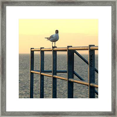 Gull On A Rail Framed Print by Michael Canning