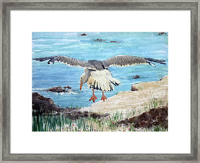 Gull On The Washington Coast Framed Print by Stephen Boyle