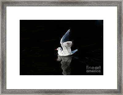 Gull On The Water Framed Print by Michal Boubin