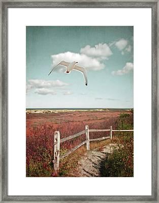 Gull Over Provincelands Trail, Cape Cod Framed Print