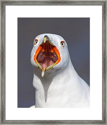 Gull Portrait Framed Print by Mircea Costina Photography