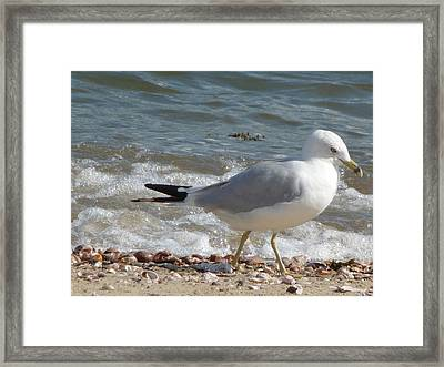 Framed Print featuring the photograph Gull Strolling The Shore by Margie Avellino