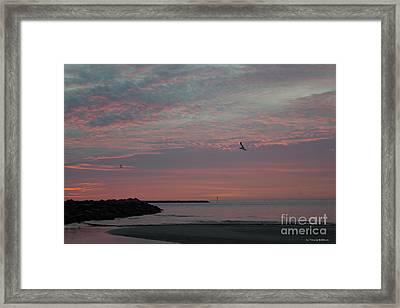 Gull Sunset Framed Print
