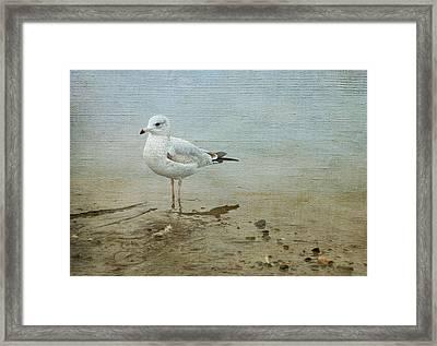 Gull Framed Print by Theresa Tahara