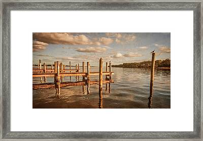 Gull Watching Framed Print by Phillip Burrow