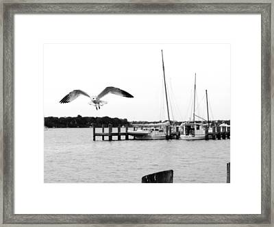 Gull Wing Framed Print