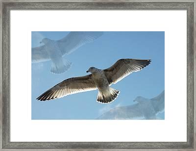 Gulls 41 Framed Print by Joyce StJames