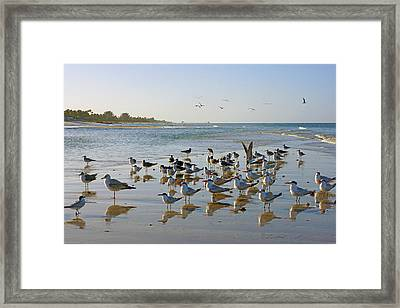 Gulls And Terns On The Sanbar At Lowdermilk Park Beach Framed Print