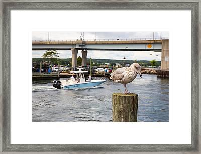 Gulls Cove Framed Print