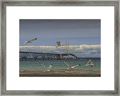 Gulls Flying By The Bridge At The Straits Of Mackinac Framed Print by Randall Nyhof