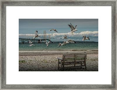 Gulls Flying By The Mackinac Bridge At The Straits With Park Bench Framed Print by Randall Nyhof