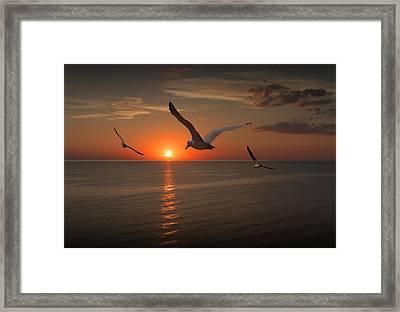 Gulls Flying Towards The Sun Framed Print by Randall Nyhof