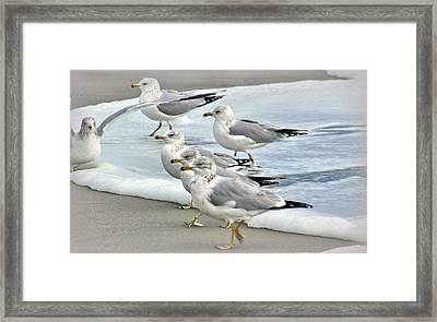 Gulls In The Surf Framed Print by Rosanne Jordan