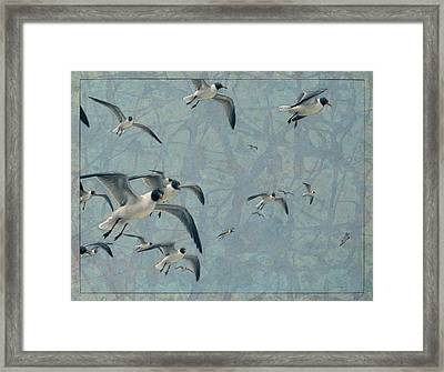 Gulls Framed Print by James W Johnson