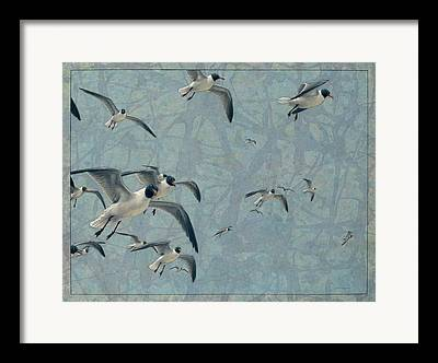 Gulls Drawings Framed Prints
