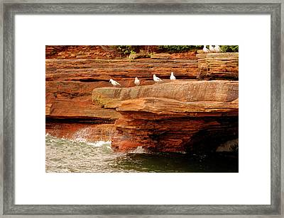 Gulls On Outcropping Framed Print