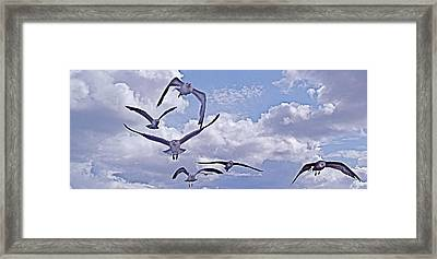 Gulls Will Be Gulls Framed Print by Mike Shepley DA Edin