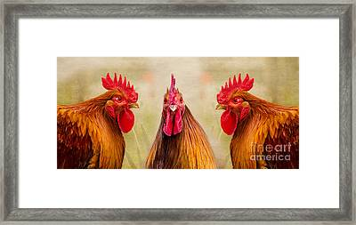 Gulp Framed Print by Linsey Williams