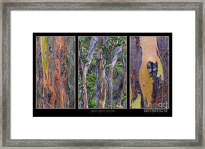 Gum Trees At Lake St Clair Framed Print by Werner Padarin