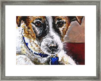 Gunter From Muttville Framed Print by Mary-Lee Sanders