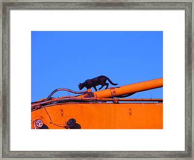 Gunther Gets On Top Of Things Framed Print