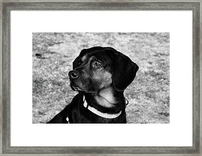 Gus - Black And White Framed Print
