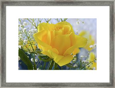 Framed Print featuring the photograph Gypsophila And The Rose. by Terence Davis